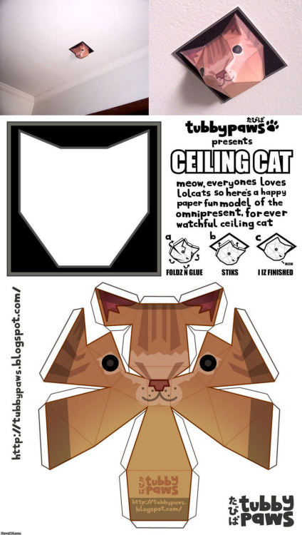 nine-volt-heart: Paper ceiling cat.