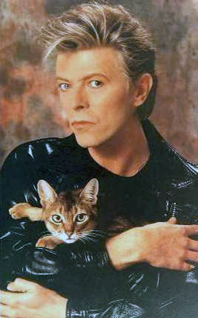 annahatesbananas:  David Bowie is team cat. Your argument is invalid.