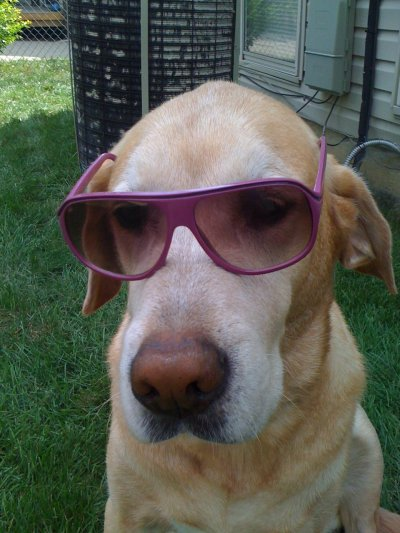 theanimalblog: nicklikewoah: LiL BaBY HuDSON A DOG?!?! IN SUNGLASSES?!?!?! SAY WHAAAAAATTTTTTTT?!?!?!?!!