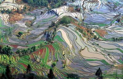 Aerial view of the Yuanyang County rice fields.