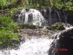 selva: picture from the waterfall on my land