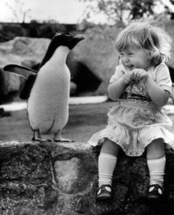 mandolynnwinbun:  karlahack: I had the same reaction to a penguin!  omg so cute. I want to pat it lol