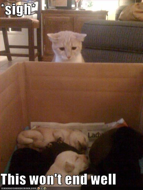 Um… i feel the kitteh's pain