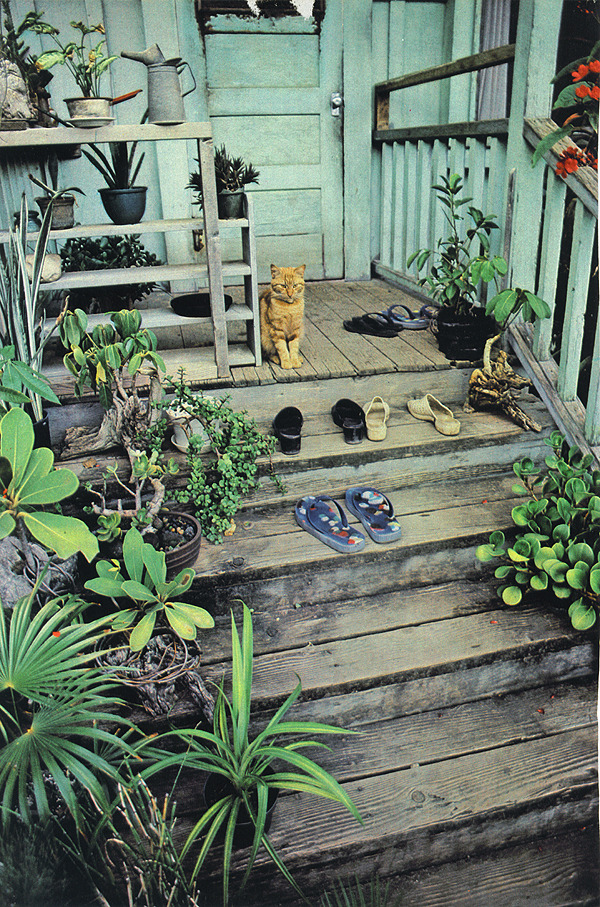 themagnificentlifeofplants:  (via quiettime)  A porch garden with the requisite cat.