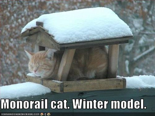 gato no frio fonte: Monorail cat. -  Can Has Cheezburger?