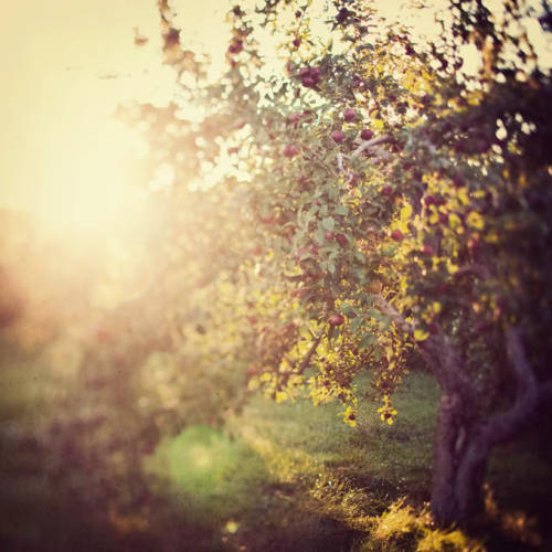 designlovely:  eye poetry: There's a place in the orchard …