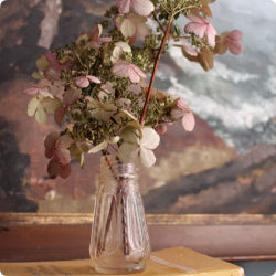Design*Sponge » Blog Archive » made with love: drying hydrangeas