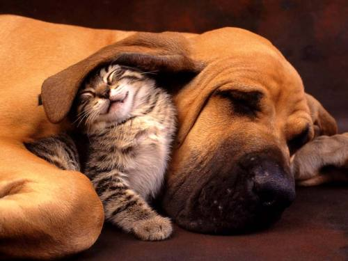 Desktop Wallpaper · Cat and Dog - the Best Friend