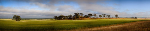 Rock outcrop in farmland panorama by way of context although this outcrop has been grazed and so is cleared of flowers. The click through link goes to a decent sized version on my gallery website. robertvankoesveld.com