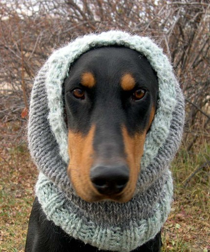 "How to humiliate your pet 101:  Buy him a hand knitted snood for XL Dog on etsy I wonder what that dog is more peeved about: 1) being labeled XL (weight is just a number!) 2) wearing a mohair-acrylic snood, which according to wikipedia are ""most commonly worn by married Orthodox-Jewish women"" 3) never being able to show his face again at the dog-run after last week's incident with the Weimaraner in the Dobercoat"