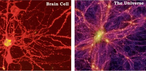 lickystickypickyme:  Physicists discover that the structure of a brain cell is the same as the entire universe.One is only micrometers wide. The other is billions of light-years across. One shows neurons in a mouse brain. The other is a simulated image of the universe. Together they suggest the surprisingly similar patterns found in vastly different natural phenomena. (David Constantine)more here