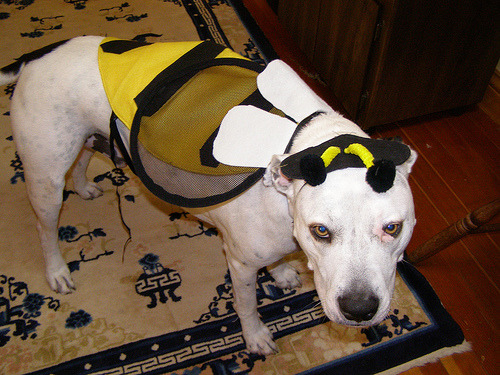 PeeWee (aka, BeeWee) wishes you all a very Happy Halloween!