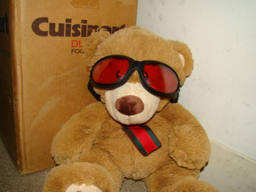 The Cool Teddy  Bear