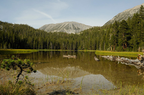Rock Creek Meadow by Raymond