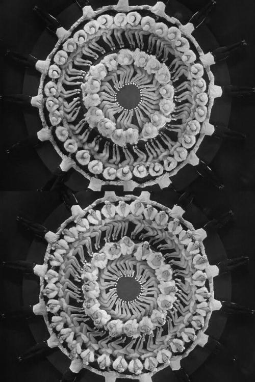 42nd Street (1933, dir. Lloyd Bacon, choreography by Busby Berkeley)