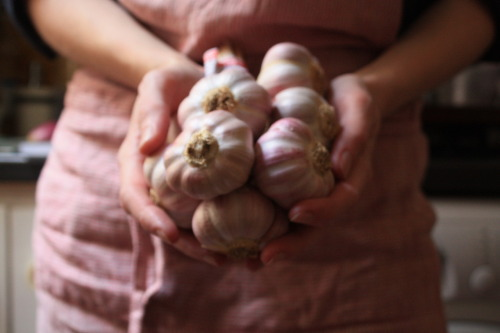 Reason #47 of why i love France: L'Ail Rose de Lautrec (Pink Garlic from Lautrec) with its characteristic pink skin and mild flavor.  i like to get my pink garlic in early fall and it will last me through the winter.