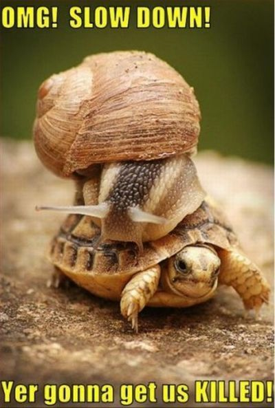 (via omnickpotent) I love LOLTurtles.