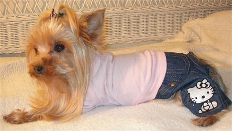 Doggy wearing Hello Kitty kid's jeans