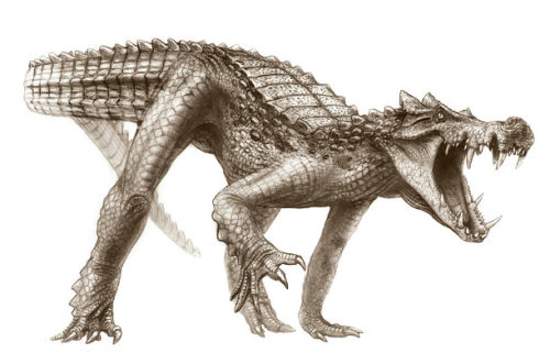"behold the Crocodino. inothernews:  WHEN… CROCODILES RULED THE EARTH? In a newly published paper, scientists have described five crocodile species who once lived in present-day Niger and Morocco. The scientists gave their discoveries names that evoke each species' unique physical attributes. The meat-eating ""BoarCroc,"" above, measured 20 feet, with an armored snout and three sets of dagger-shaped fangs.  (Illustration: Todd Marshall / National Geographic via Time Magazine)"
