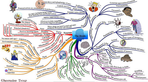The Brain, an iMindMap (via charmainezoe)