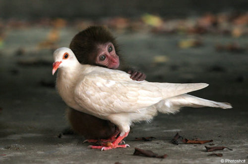12-week-old abandoned monkey and a pigeon at an animal sanctuary in China