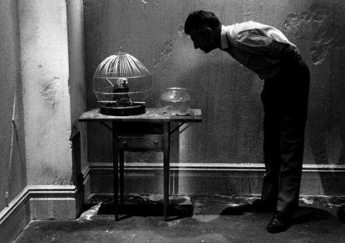 Samuel Beckett Looking at Parrot, New York (1964) – Steve Schapiro