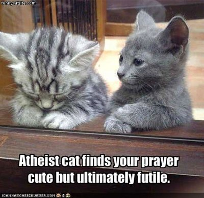 cat praying joke