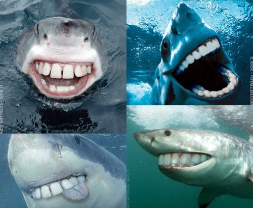Sharks with people teeth.