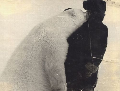 (via androphilia, asparagusarchive) I should be a polar bear, but it's impossible…