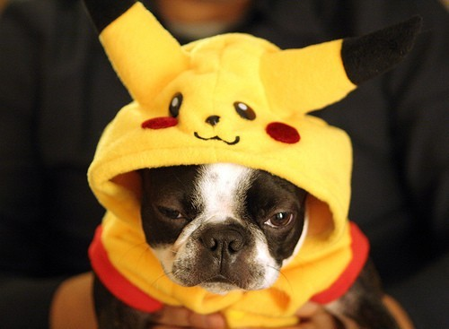 If I succumbed to the Pokemon Profile Pic deal on Facebook, I would probably use this picture.