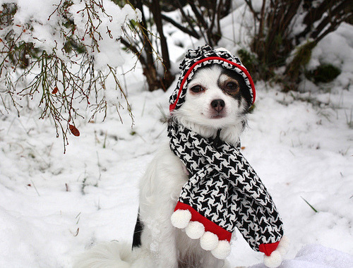 First Snow Day (via pintavelloso)