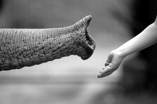 black-and-white:  1x.com - Photo: Friendship by Luisa Mantero