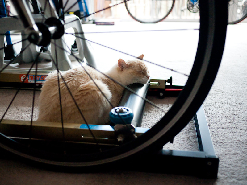 778:  suyhnc:  Lazy Cat (via jason5milliron)(via pedalfar)