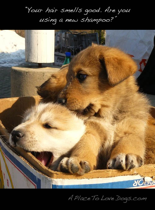 hono-lulu:  aplacetolovedogs:  via pictures-of-dog