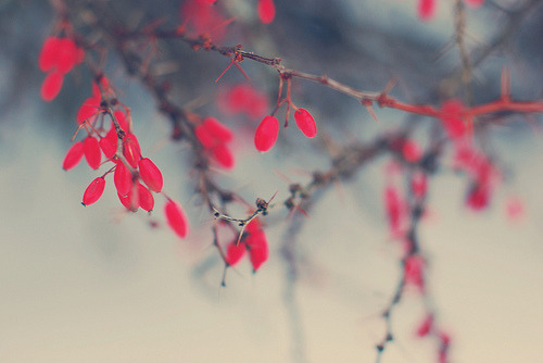 robot-heart:scattered reds (via e.kristina)