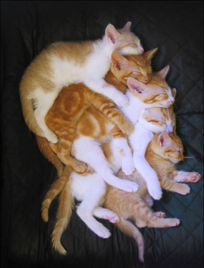 caturday:  Stack