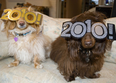 OK a little late with these guys they are new years dogs. They have glasses on where they look through the zeros in the year. I don't know what they're going to look through next year because there will only be one zero maybe they'll be new years pirate dogs and just use one eye per dog and keep the other one closed. update: i just noticed the dog on the right can't see through the zeros at all maybe he's practising for being a double-pirate in the year 2111 or something when there will be no zeros to look through.