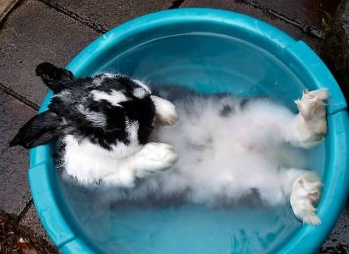 Bunny went for a quick swim. From Cute Overload.