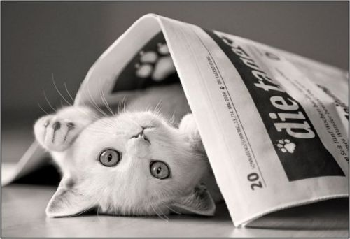 caturday:  News topic