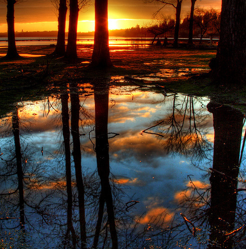 magicalnaturetour:  magicalnaturetour:  Puddle Clouds by skycaptaintwo