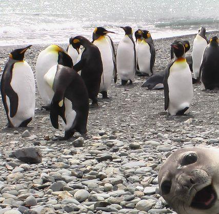 whoiscove:  This seal has a great sense of humor. And how his other seal friends posted this online, I do not know. What a freaking hilarious picture.