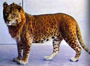 A leopon?! That's fucking fantastic!