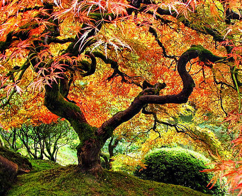 Autumn Tree on Flickr - Photo Sharing! on we heart it / visual bookmark #872310