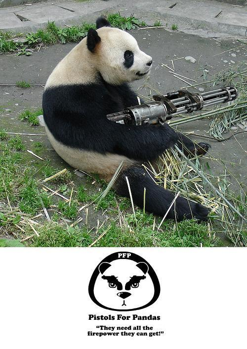 pandas need guns too lol