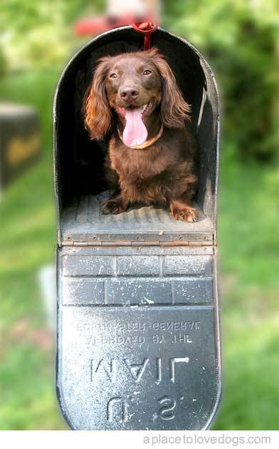 you've got mail… (via) aplacetolovedogs:  thedustinvu-wienerblog:f-yeahdogs:lattata:ted-e-mail