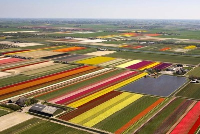 Inspiration - Norwegian Tulip Fields
