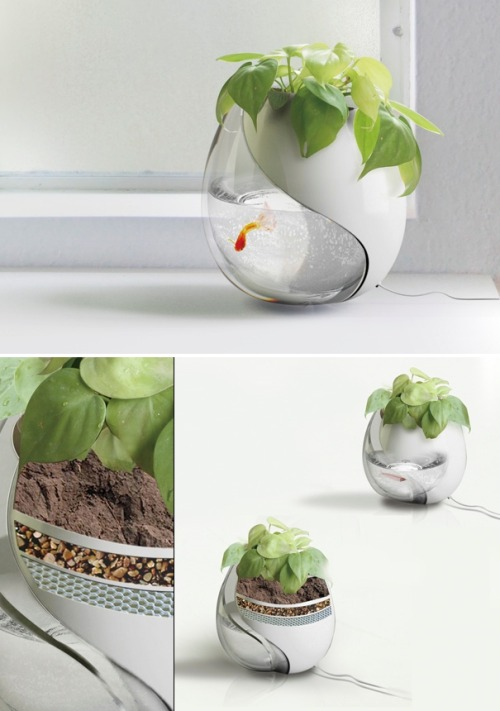 "thedailywhat:  Eco-System Design Concept of the Day: ""Circulating Fish Tank and Plant Pot"" by Sheng-Zhe Feng and Ling-Yuan Chou. The fish excrement provides healthy nutrients for the plant, while the water fed to the plant passes through a filtration layer into the fish bowl, ensuring that it is fresh and clean. In addition, this unique environment keeps fish waste from contaminating the water, and persistent humidity means less watering. [yanko.]"