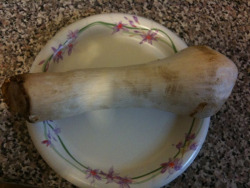 King oyster mushroom from the farmers market. What should I do with it?