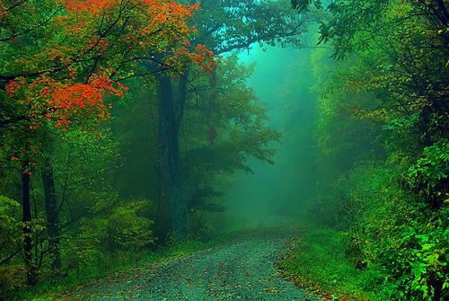 Foggy Fall Road (via LynchburgVirginia)