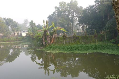 Jan. 2009, Early morning by the fish pond. Faridpur, Bangladesh
